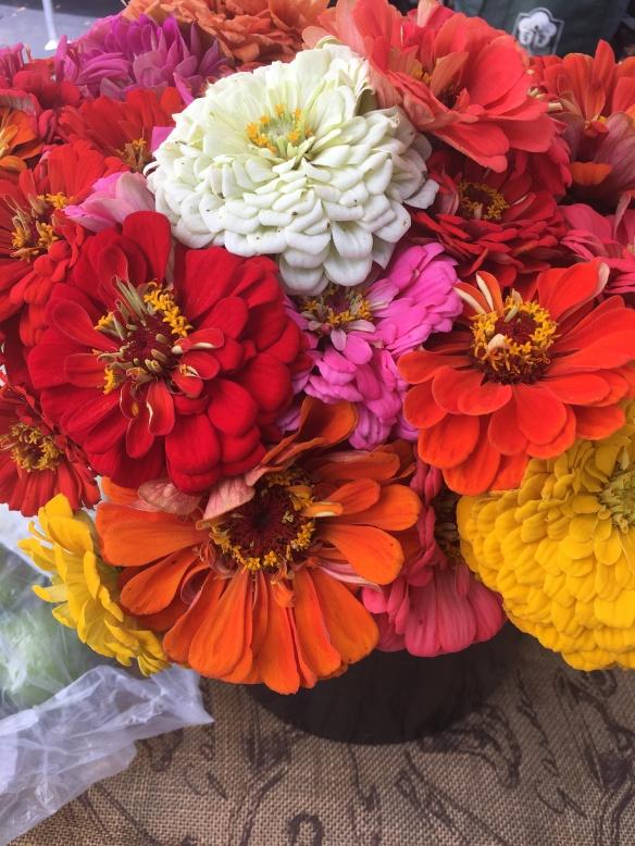 Flowers (Zinnias)